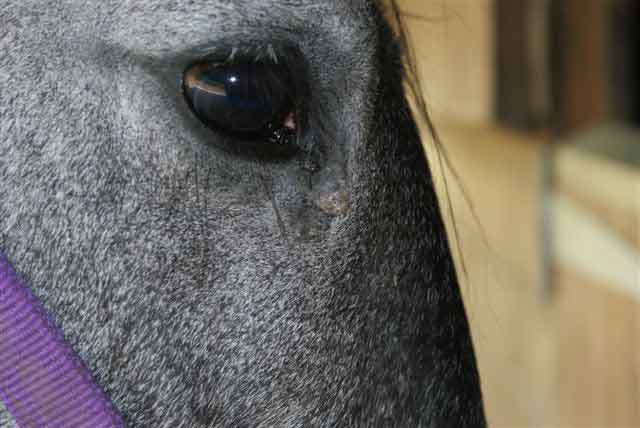 Natural Remedies For Copd In Horses